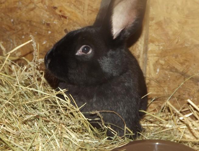 Kaninchen Pippi-Lotto