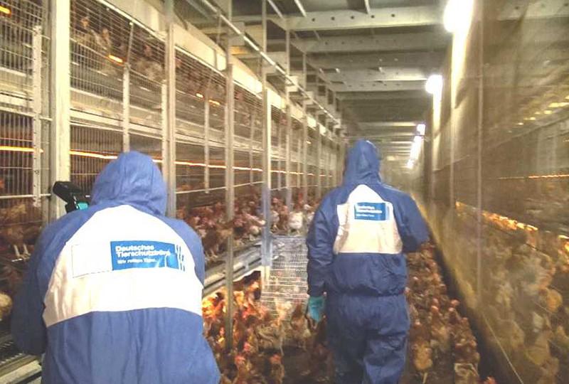 Wir haben das Elend dokumentiert und ein paar Hühner mitgenommen