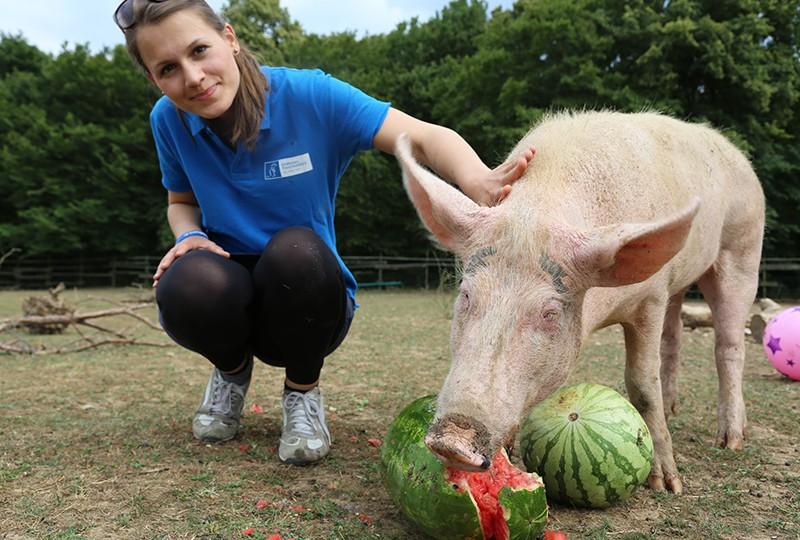 Wir wünschen Laura ein langes und erfülltes Schweineleben