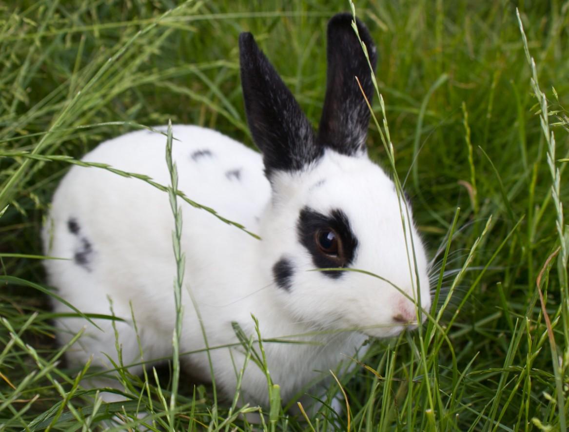 Tierpatenschaft für Kaninchen Kartöffelchen übernehmen