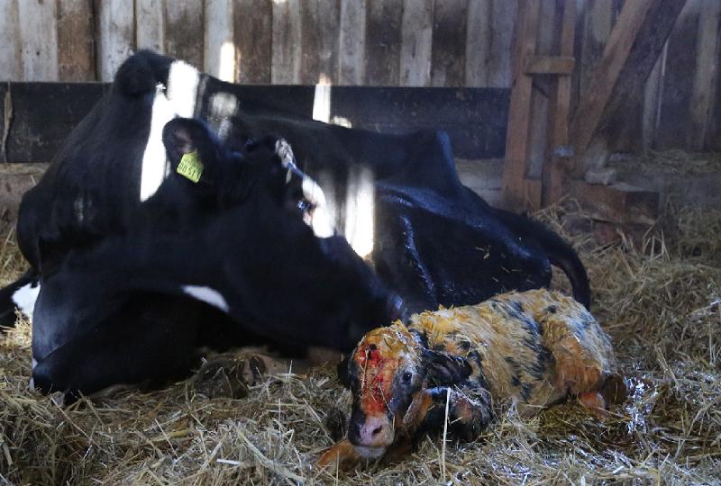 Die ersten Minuten direkt nach der Geburt. Für Dorte und Marla war es sehr anstrengend.