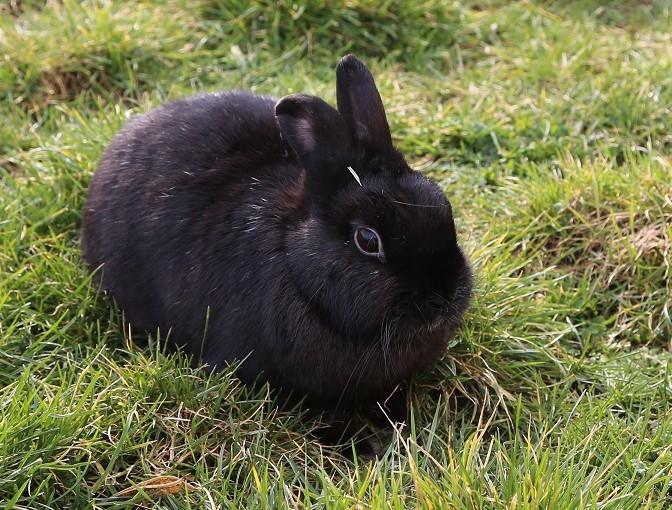 Tierpatenschaft für Kaninchen Hänsel übernehmen