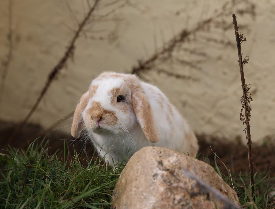 Tierpatenschaft für Kaninchen Willi übernehmen