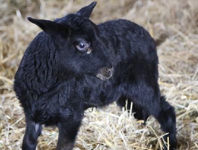 Tierpatenschaft für Schaf Bruno übernehmen