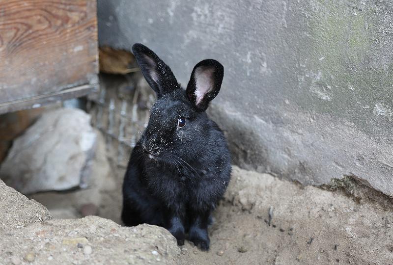 Budeln gehört zu den natürlichen Bedürfnissen von Kaninchen, umso mehr freut sich Luzie über ihr neues Zuhause.