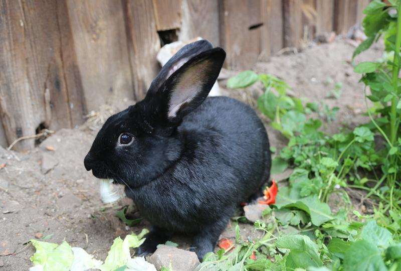 Lecker Salat und Paprika. Lexie freut sich über seine abwechslungsreiche Kost.