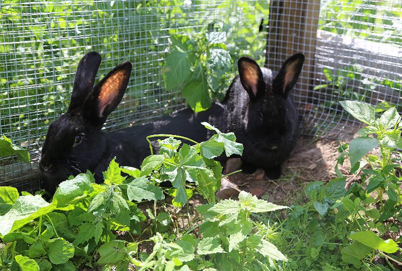 Luzie und Lexie in ihrem neuen Zuhause.
