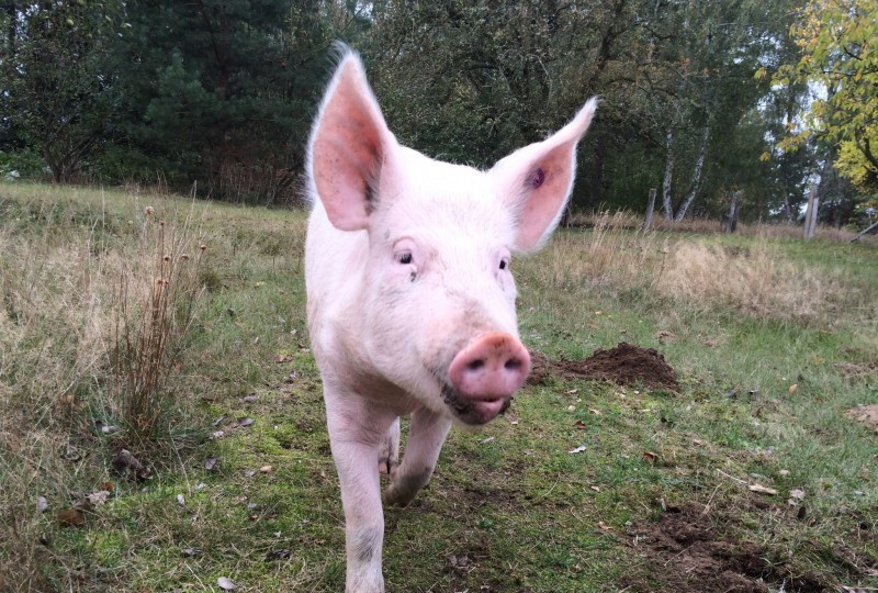 Sally als Jungschwein