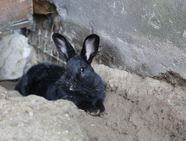 Tierpatenschaft für Kaninchen Lexie übernehmen