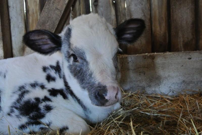 Marla mit drei Monaten.