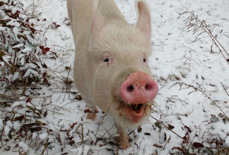 Lilly im Schnee.
