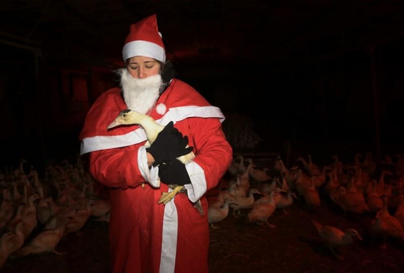 Emil wurde vom Weihnachtsmann gerettet.