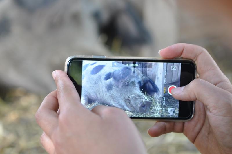 Immer auf der Suche nach schönen Bildern unserer Tiere