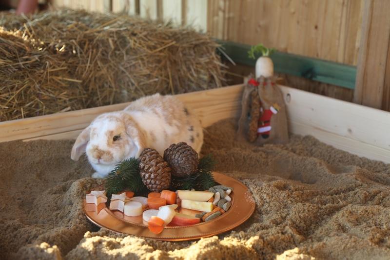 Willi an Weihnachten
