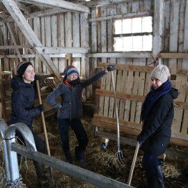 Frühjahrsputz im Kuhstall aka Workout beim Ausmisten