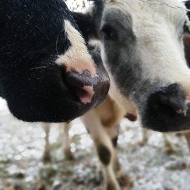 Die schönsten Wintermomente mit unseren Tieren