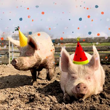 It´s Partytime – Lilly & Sally seit 4 Jahren in Freiheit!