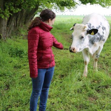 Wie Rinder kommunizieren