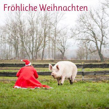 Weihnachten bei unseren geretteten Tieren! 🎄🤶