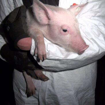 Wie eine Tierpatenschaft Leben rettet?
