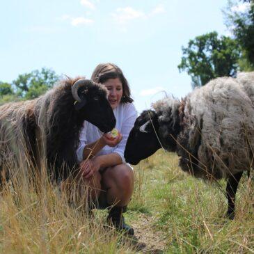 So toll sind Schafe – 5 Fakten! 🐑